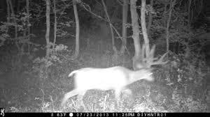 Mule Deer on Browning Recon Force and Spec Ops Trail Camera - YouTube
