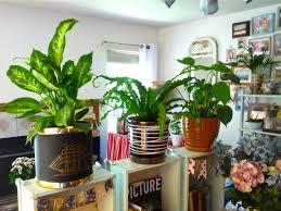 Large Size of Living Room best Indoor Plant Decor Ideas On Pinterest Decorative  Plants For Best.