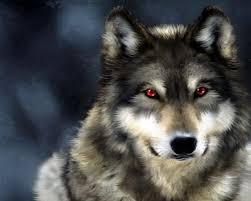Wolf Hd Wallpaper On Wallpapergetcom