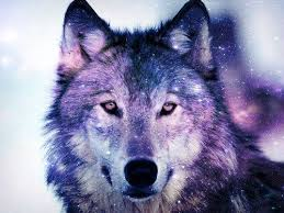 galaxy tumblr hipster wolf.  Wolf Hipster Wolf Galaxy Tumblr U2013 Modifikasi Sepeda Motor In
