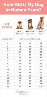 Dog Age Chart See How Old Your Dog Is In Human Years
