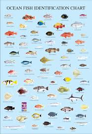 Print Advert By Fish Chart Ads Of The World