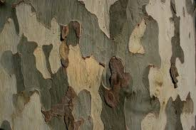 mimic the colors of nature by combining various colors of paint manufactured specifically for camouflage s