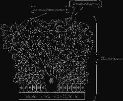Биология Эпидермис Реферат Учил Нет  Среди зародышевых клеток располагаются крупные отросчатые клетки меланоциты осязательные клетки клетки Меркеля и белые отростчатые эпидермоциты