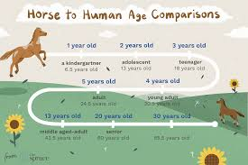 Comparing Horse To Human Age