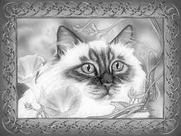 Small Picture 535 best Cats to Color all kinds of cats images on Pinterest