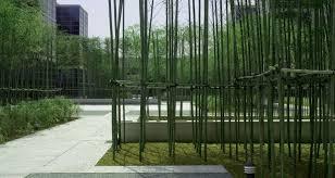 Small Picture Bamboo Garden Design Garden Bamboo Garden Designs Home Furniture