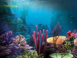 أكبر تجميع لأجمل صور من اعماق البحار (سبحان الله الخالق العظيم) Images?q=tbn:ANd9GcSH3FWdtmteM3PTbc7wX0qO1oAZoU7FCgmgyipT_3Yop9bMgGm4