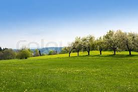grass and sky backgrounds. Green Grass Field Landscape With Blue Sky In The Background, Stock Photo And Backgrounds