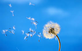 תוצאת תמונה עבור wind