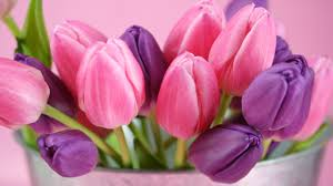 Purple Flower Quotes Purple Tulip Flower Pictures Flowers Healthy