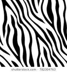 Zebra Patterns Classy Zebra Prints Images Stock Photos Vectors Shutterstock