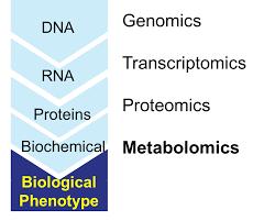 Metabolomics Wikipedia