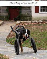tripawd dog wheelchair tips