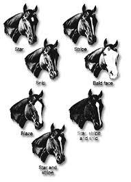 Markings On Horse