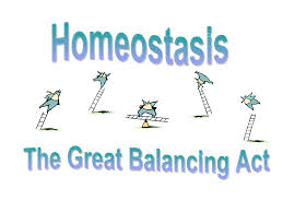 What Is Homeostasis In Biology 127 Summary Of Homeostasis And Co Ordination Biology Notes