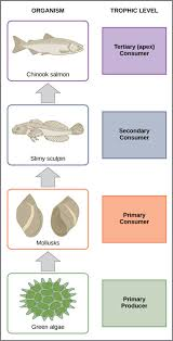 Create Flow Charts That Show Four Different Food Chains Food Chains And Food Webs Biology For Majors Ii