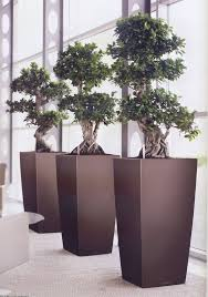 Image Cool Office Bonsai Tree With Best Bonsai Plants For Offices Images On Pinterest Bonsai Iseeds Office Bonsai Tree With Best Bonsai Plants For Offices Images On