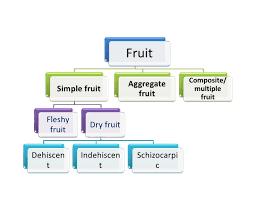 Morphology Of Fruits