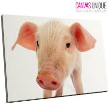 image is loading a167 pink white baby pig piglet animal canvas  on pig canvas wall art with a167 pink white baby pig piglet animal canvas wall art framed
