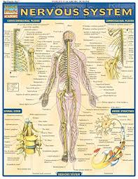 Quick Study Academic Charts Download Pdf Books Nervous System Laminate Reference Chart
