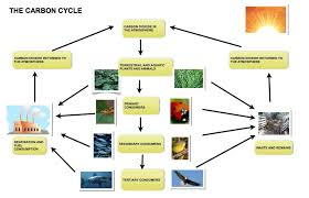 ielts task process diagram a natural cycle understanding the cycle