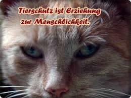 Nachdenkliches Und Trauriges Minimausers Webseite