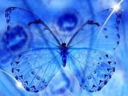 Beautiful Blue Butterfly Wallpaper Hd
