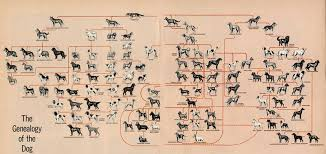 Dog Breed History Chart Dog Breed Geneology Dont Have A Dog But I Am Fascinated By