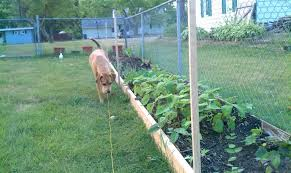 keep dogs out of garden keep dogs out of garden dog gardeners world dog gardeners world keep dogs out of garden