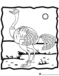 Small Picture Ostrich Coloring Page Woo Jr Kids Activities
