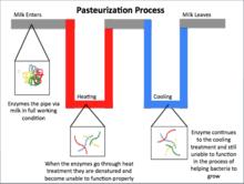 Milk Pasteurization Temperature Chart Pasteurization Wikipedia
