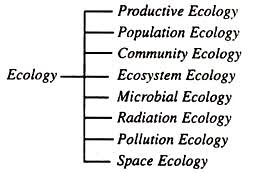 essay on ecology branches of ecology