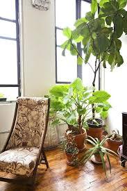 Exceptional Best Indoor Plants Living Room
