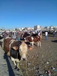 hayvan pazarı ile ilgili görsel sonucu