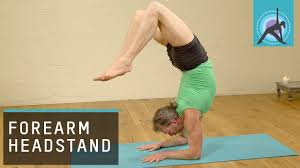 headstand into fore arm balance advanced yoga withandrew wrenn