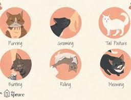 Cat Body Language Chart Understanding Cat Language And Signals