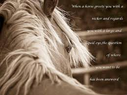 Cowgirl Quotes Amazing Horse Quotes Cowgirl Quoteshorse Quotes Picture Gallery