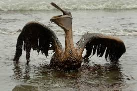 gulf oil spill will obama bring it up at the g g meetings gulf oil spill will obama bring it up at the g8 g20 meetings com