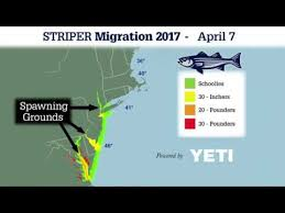 Striper Migration 2017 In Review