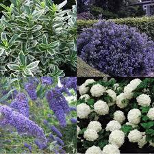 gardens4you coastal shrub garden