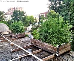 Small Picture Exploring Eccos Rooftop Garden with Executive Chef Craig Richards
