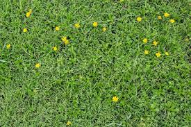grass and flowers background.  Flowers Green Grass With Yellow Flower Background Texture  Stock Photo Colourbox Throughout Grass And Flowers Background K