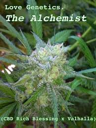 the alchemist by love genetics seedfinder strain info