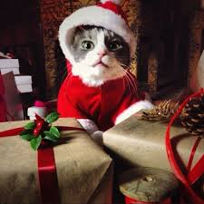 STYLETAILS CHRISTMAS GIFT GUIDE FOR CAT LOVERS  Pets  Pinterest Christmas Gifts Cats