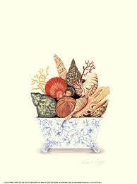 Lorna De Gallegos Seashell Collection Ii