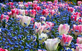 desktop wallpaper flowers high resolution. Fine High Spring Flowers Images Desktop Wallpaper  TimeDoll Throughout High Resolution
