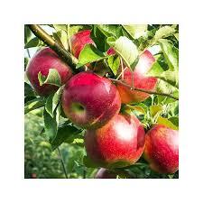 """Résultat de recherche d'images pour """"pomme raisin noir photo sans droit"""""""