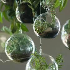 astonishing picture of hanging plant terrarium ideas