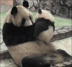 baby panda gif. Exellent Panda Panda GIF On Baby Gif